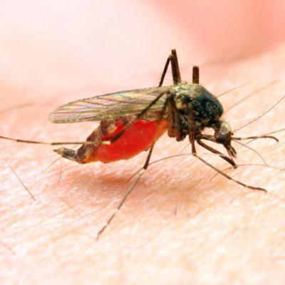 Twenty-Four Percent Increase Dengue, Malaria in 7 Days